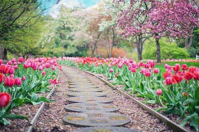 glebogryzarka ogród trawnik