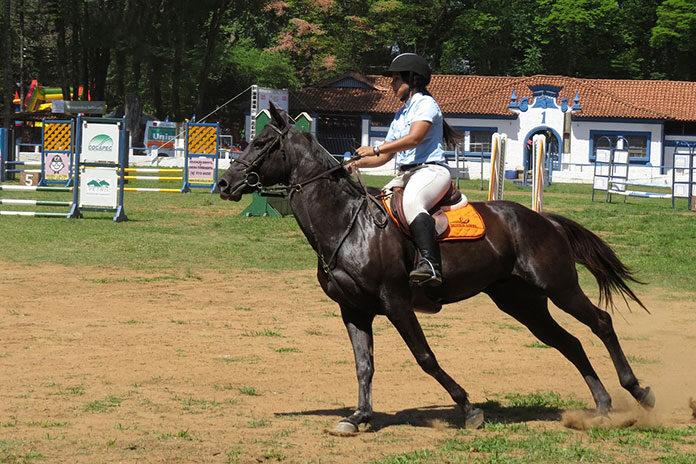 Czym są czapraki i ogłowia dla konia