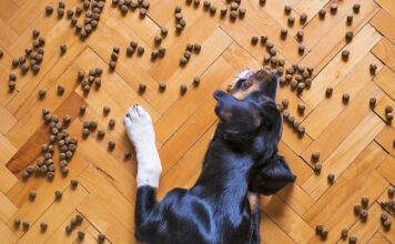 karma dla psa